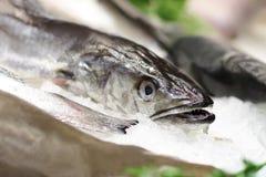 Vissen in ijs Stock Afbeeldingen