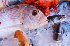 Vissen in ijs Stock Afbeelding