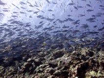 Vissen in Indische Oceaan in de Maldiven Royalty-vrije Stock Afbeeldingen
