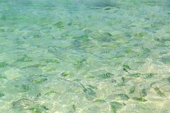 Vissen (indo-Vreedzame sergeant) in een tropische overzees bij Phi Phi-eiland Stock Afbeelding