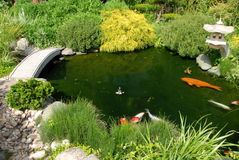 Vissen in Japanse garedn stock afbeeldingen