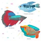 Vissen Kleurrijke Vectorreeks royalty-vrije stock foto's