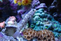 Vissen in koraal Stock Afbeelding