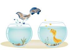 Vissen in liefde die aan zijn geliefd springen Royalty-vrije Stock Foto