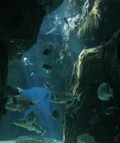 Vissen in Lissabon Oceanarium Stock Afbeelding
