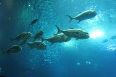 Vissen in Lissabon Oceanarium stock foto's