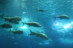 Vissen in Lissabon Oceanarium Stock Afbeeldingen