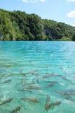 Vissen in meer Royalty-vrije Stock Foto