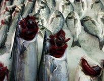 Vissen met rode open die kieuwen uit op ijs in een markt worden uitgespreid stock foto