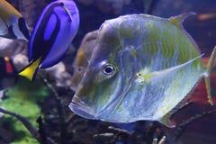 Vissen naar beneden Stock Fotografie