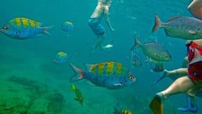 Vissen in oceaan stock fotografie