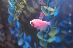 Vissen onderwater Stock Foto