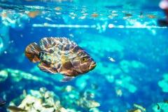 Vissen onderwater Stock Afbeeldingen