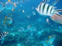 Vissen onderwater Royalty-vrije Stock Foto