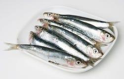 Vissen op de plaat Stock Foto's