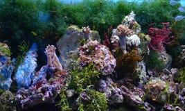 Vissen op een close-up Royalty-vrije Stock Foto
