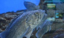 Vissen op een close-up Royalty-vrije Stock Foto's