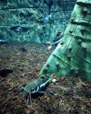 Vissen op een close-up Royalty-vrije Stock Afbeelding