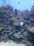 Vissen op een close-up stock afbeelding