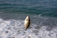 Vissen op een haak royalty-vrije stock foto's
