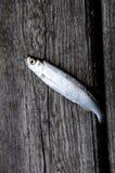 Vissen op een hout royalty-vrije stock afbeelding