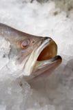 Vissen op een ijs in winkel Stock Foto