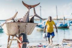 Vissen op een kruiwagen Stock Foto