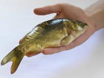 Vissen op hand royalty-vrije stock fotografie