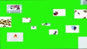 Vissen op het groene scherm, klem stock illustratie