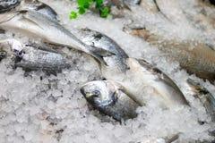 Vissen op ijs Stock Afbeeldingen