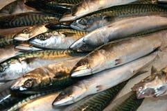 Vissen op Ijs Stock Foto