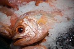 Vissen op ijs Stock Fotografie