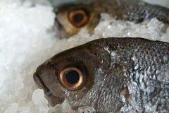 Vissen op ijs Royalty-vrije Stock Fotografie