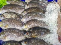 Vissen op ijs royalty-vrije stock foto's