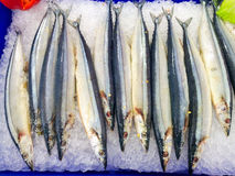 Vissen op ijs Stock Afbeelding