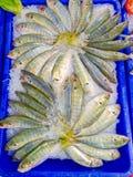Vissen op ijs royalty-vrije stock afbeeldingen