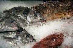 Vissen op ijs 2 Royalty-vrije Stock Foto