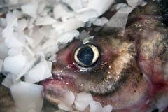 Vissen op ijs 3 Royalty-vrije Stock Fotografie