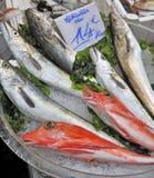 Vissen op ijs bij een markt royalty-vrije stock foto