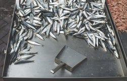 Vissen op ijs in de markt Royalty-vrije Stock Foto's