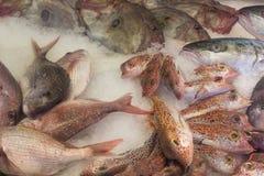 Vissen op ijs op markt Royalty-vrije Stock Foto's
