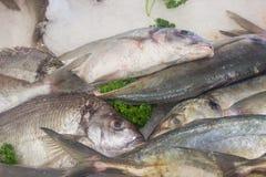 Vissen op ijs op markt Stock Foto