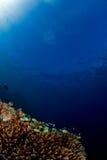 Vissen op koraal Stock Afbeeldingen