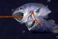 Vissen op langsligger Stock Foto's