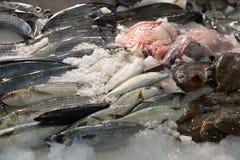 Vissen op mediterrane marktteller Stock Foto