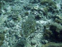 Vissen op overzeese bodem royalty-vrije stock afbeeldingen