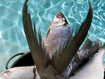Vissen op pan tegen water royalty-vrije stock fotografie