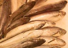 Vissen op Vertoning Stock Foto's