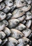 Vissen op vertoning bij markt stock fotografie