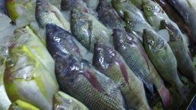 Vissen op vertoning in een markt stock video